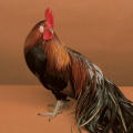Creative Edge Parties Advertisement
