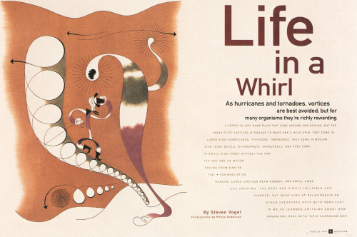 """Life in a Whirl"""