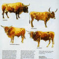 Genus Bos: Cattle Breeds of the World