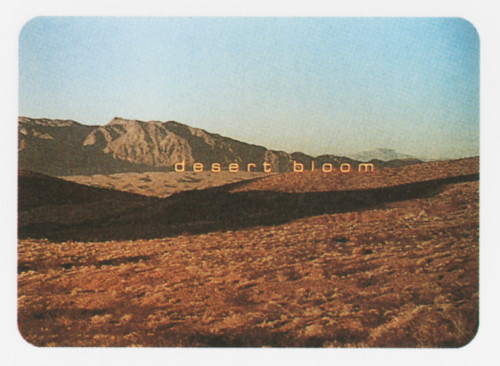 """Desert Bloom"""