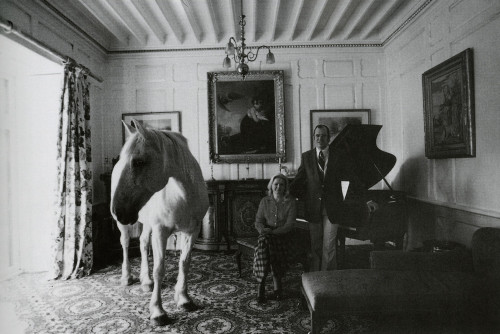 A Horse in the Dining Room