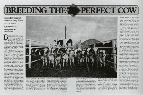 Breeding the Perfect Cow
