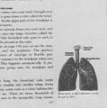 Health and Growth: 5