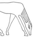 Ancient Greek Horsemanship