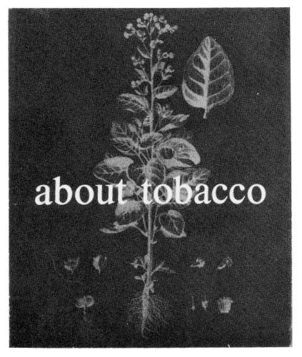 About Tobacco