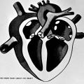 Heart: Anatomy, Function and Diseases